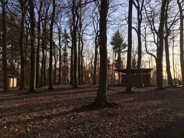 Parkwald in Segendorf